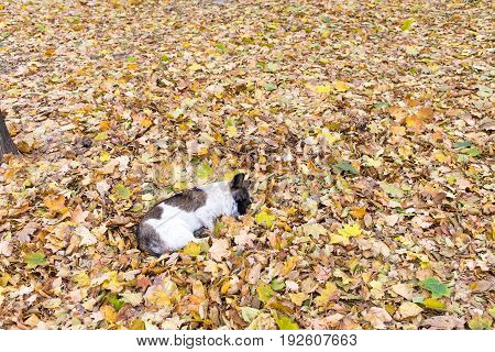 Spotty dog lies on a pile of dry yellow leaves. Photo can be used as a whole background.