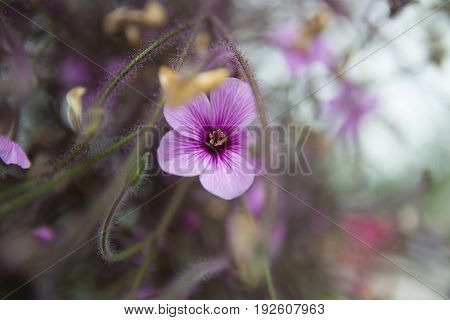 Close-up look at a beautiful purple flower on blurred and soft background.