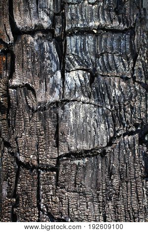 the texture of the burnt tree gray blue