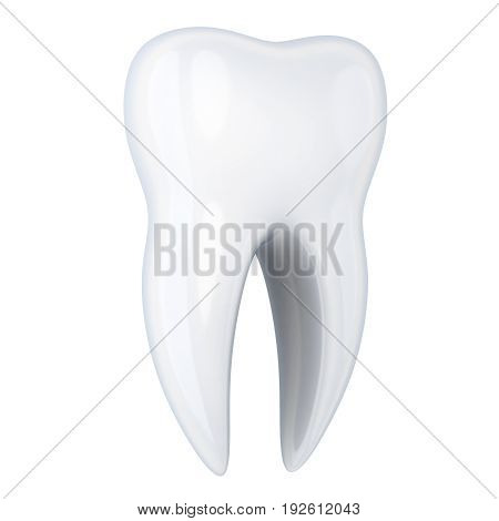 Human Tooth White Isolated