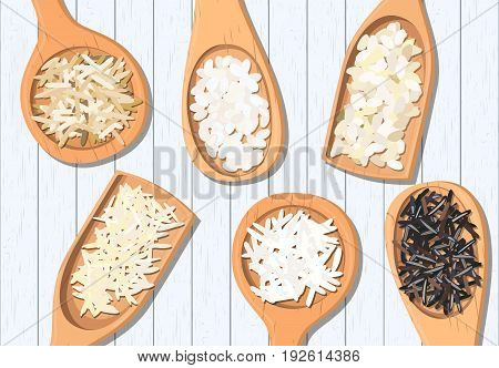 Different types of rice in wooden spoons. Basmati wild jasmine long brown arborio sushi. For label poster advertising. Vector illustration. white planks frame. For fastfood restaurant logo