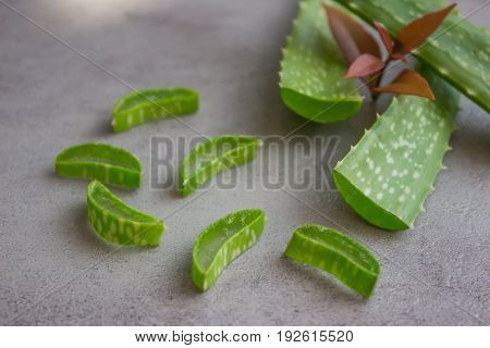 Aloe sliced, isolated on a cement background