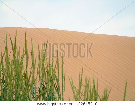 Sand dune among steppes in Kalmykia, Russian Federation