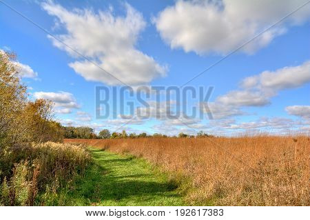 A winding path through a beautiful field of grass with a blue cloud filled sky.