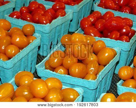 Cherry tomatoes in Markham Canada June 24 2017
