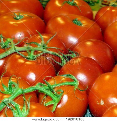 Tomatoes in Markham Canada June 24 2017