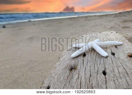 The Star Shellfish On The Bury Wood