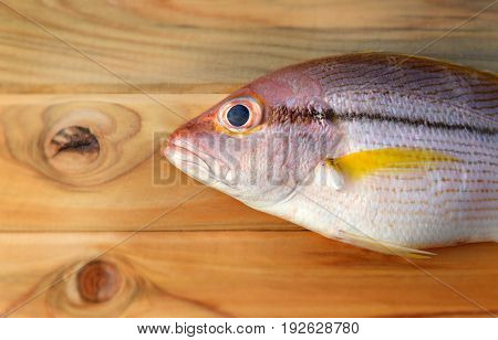 Brownstripe Snapper Seafood Fish