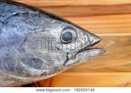 Fresh Eastern Little Tuna