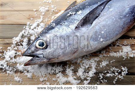 Fresh Bluefin Tuna From Market