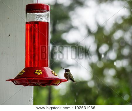 Humming bird perched on a feeder in the rain