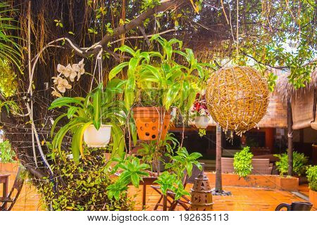 Yard decoration - pots with tropical plants (orchids) hanging on a tree - asian style