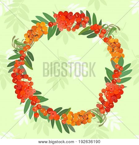 Vector pattern with a wreath made from clusters of bright ashberry, sea buckthorn and leaves. Card.
