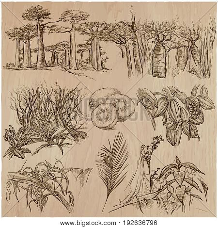 FLOWERS around the World. Collection of an hand drawn vector illustrations. Freehand sketches. Line art. Each drawing comprise of a few layers of outlines. Background wood is isolated.
