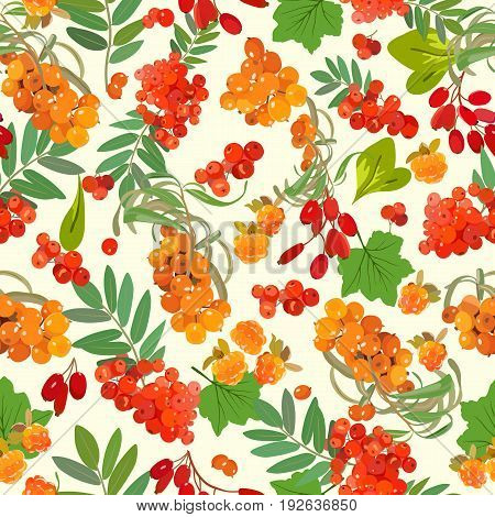 Vector pattern of juicy berries of mountain ash with sea-buckthorn, cloudberry and their leaves on a light background.