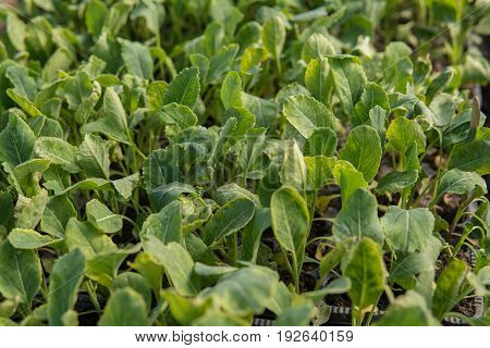 Extreme Close Up Of Small Plants