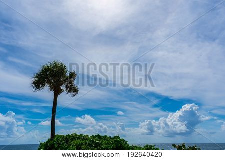 green leaves and a palm trees next to the oecean with blue sky and white clouds on a hot summer morning