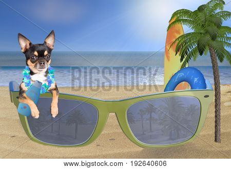 Beach with cute chihuahua dog looking in sunglasses and care for the sun