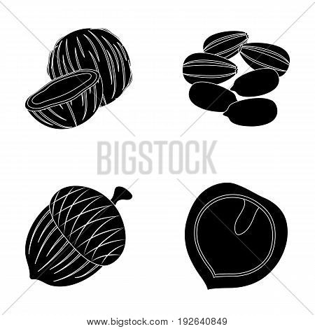 Coconut, acorn, sunflower seeds, manchueian walnut.Different kinds of nuts set collection icons in black style vector symbol stock illustration .