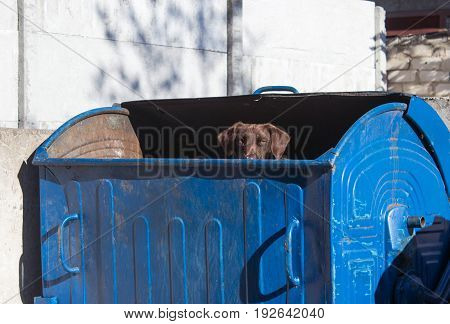 A stray dog ​​looking out of the trash can