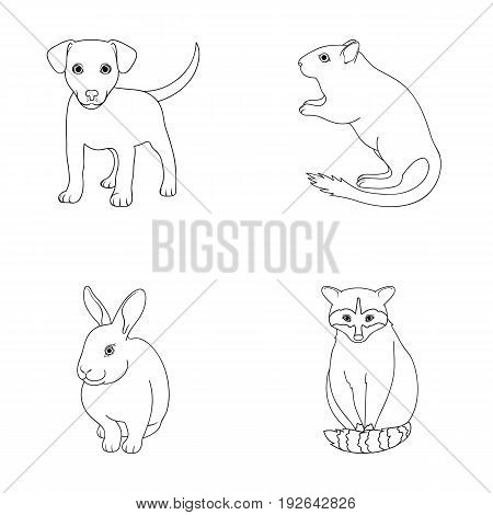Puppy, rodent, rabbit and other animal species.Animals set collection icons in outline style vector symbol stock illustration .
