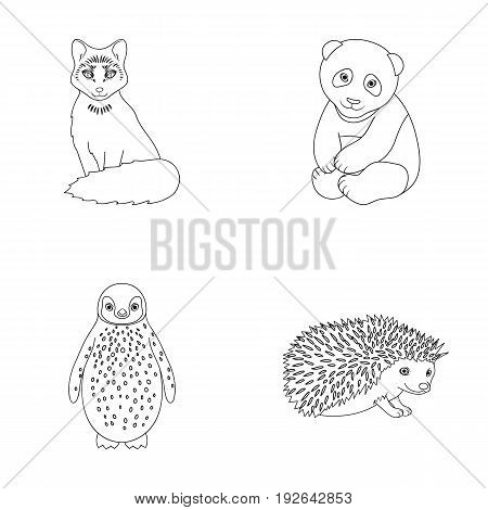Fox, panda, hedgehog, penguin and other animals.Animals set collection icons in outline style vector symbol stock illustration .
