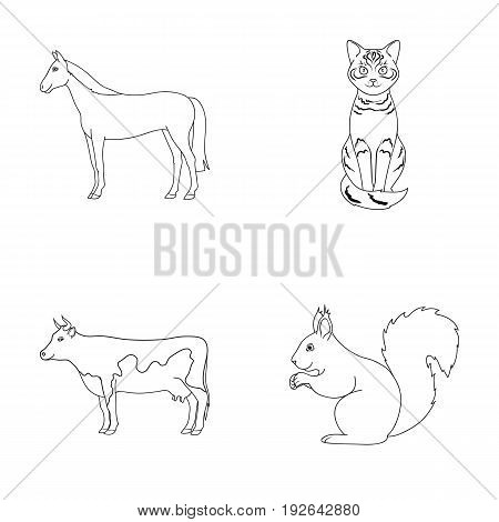 Horse, cow, cat, squirrel and other kinds of animals.Animals set collection icons in outline style vector symbol stock illustration .