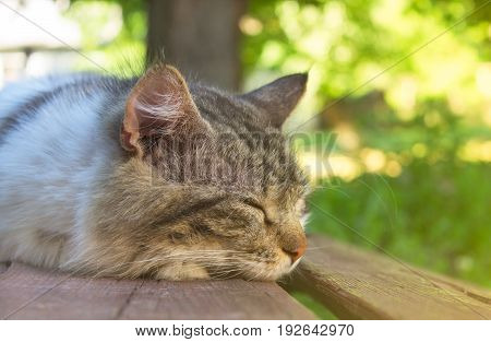 The cat lies on a bench and squintes eyes from the sun, on a summer day