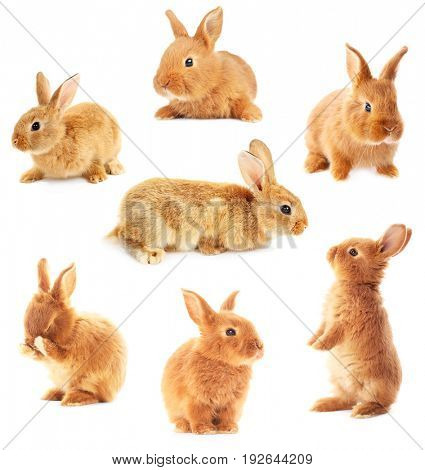 Collage of cute bunnies on white background