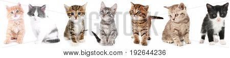 Collage of cute kittens on white background