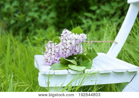 Branch of lilac on chair in garden