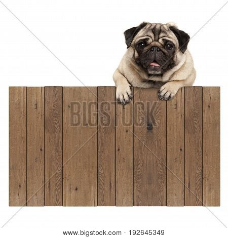 cute pug puppy dog hanging with paws on blank wooden fence promotional sign isolated on white background