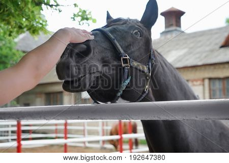 Female hand stroking horse. Concept of volunteering at animal shelter