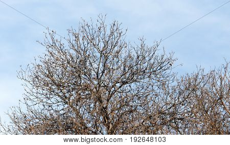 leafless tree branches against the blue sky