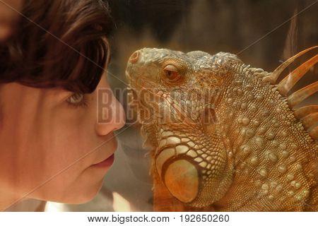 teen boy admire iguana lizard in zoo close up photo