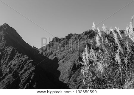The flora under the morning sun and the Dead Woman's Pass along the Inca Trail, Peru