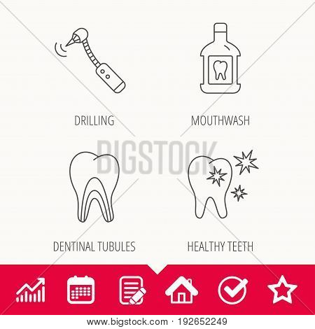 Tooth, mouthwash and dentinal tubules icons. Healthy teeth, dentinal tubules linear sign. Edit document, Calendar and Graph chart signs. Star, Check and House web icons. Vector