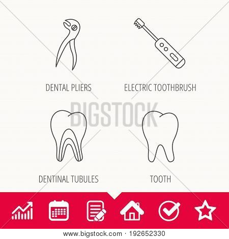 Tooth, electric toothbrush and pliers icons. Dentinal tubules linear sign. Edit document, Calendar and Graph chart signs. Star, Check and House web icons. Vector