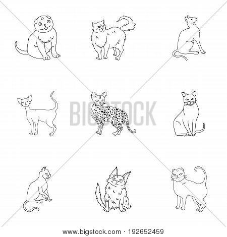 Collection of cats in one picture. Different cats in one picture. Cat breeds icon in set collection on outline style vector symbol stock web illustration.