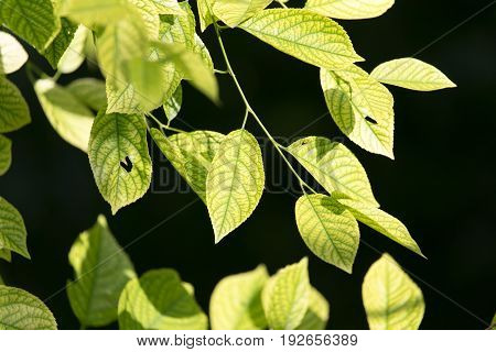 green leaves on the tree in nature at night