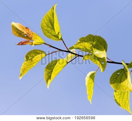 leaves on a tree against the blue sky