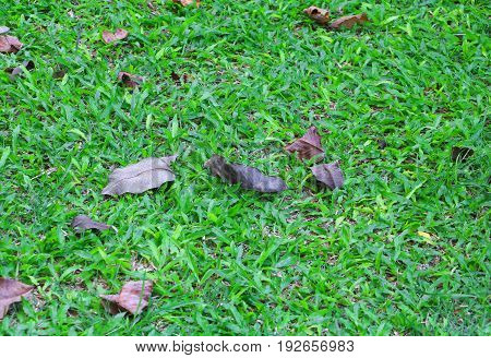 Leaf dry on green grass with background with copy space for add text