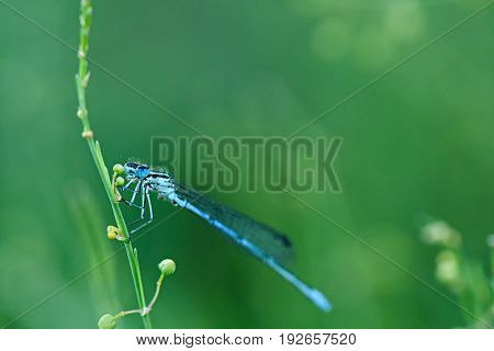 Blue Dragonfly Prepares For Bed, Settling On The Plant