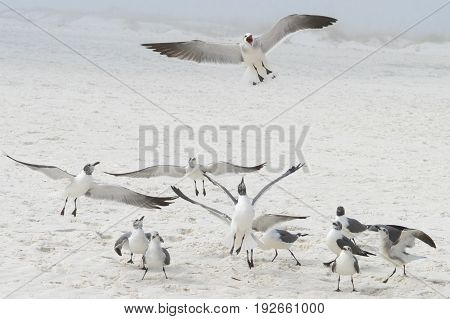 Gulls on a hazy beach in Florida