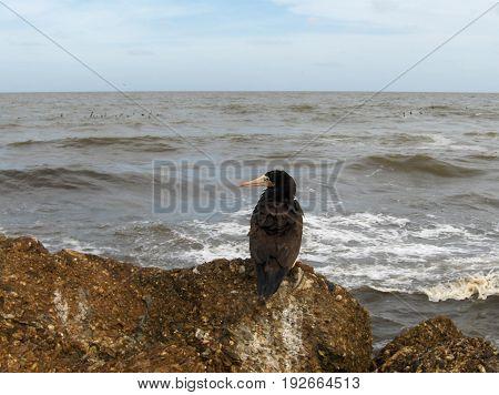 Boardwalk bird beach sea rocks duck bird