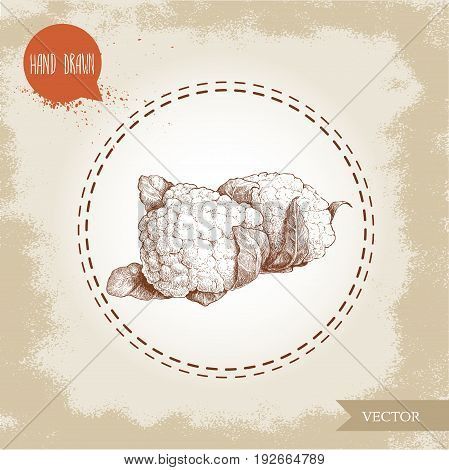 Hand drawn sketch style cauliflowers. Vector farm fresh food illustration isolated on grunge old background.