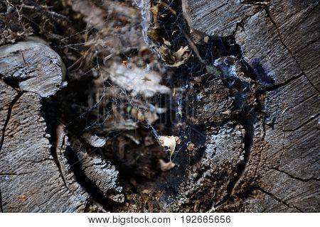 Close Up of Actinomycete Webbing On Tree Stump