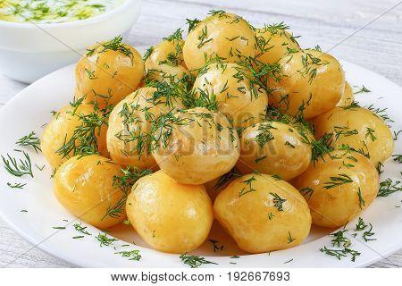 New Potatoes And Greek Yogurt Sauce