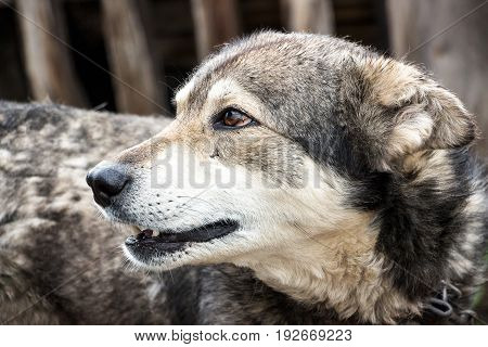 Portrait of a dog mongrel. The dog looks away
