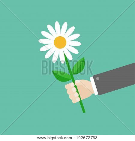 Businessman hand holding white daisy flower. Giving gift concept. Cute cartoon character. Black suit. Greeting card. Flat design. Green background. Isolated. Vector illustration